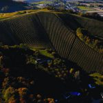 Sloveense wijn bij slijter en supermarkt