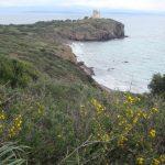 Vakantietips – wijnwandelen op Sardinië, druivenplukken in Frankrijk