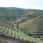 Achtmaal Douro: Douro Superior en olijven