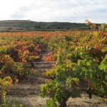Exploring Flavour: a Wine Mosaic Full of Native Varieties