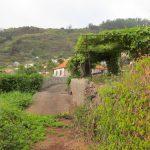 De druiven van Madeira