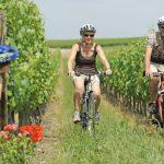 Fietsen door de Franse wijngaarden
