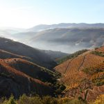 Douro is looking for entrepreneurs: help promote this region