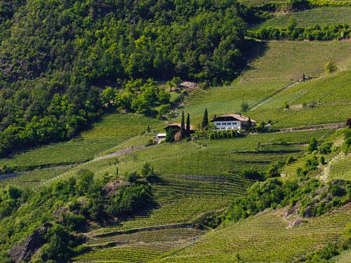 Kleinstein, een van de wijngaarden van Kellerei Bozen. (Foto Kellerei Bozen)