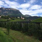 Drie Kellereien uit Südtirol: Girlan, Terlan en Bozen