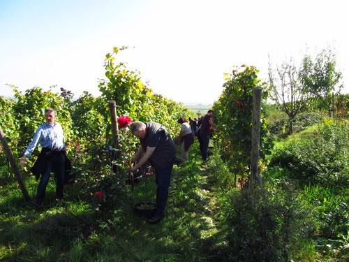 Pachters aan het oogsten, 4 oktober 2014