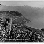 Lavaux: terrassen vol met chasselas