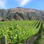 Geproefd: Nieuw-Zeelandse Pinot Noir