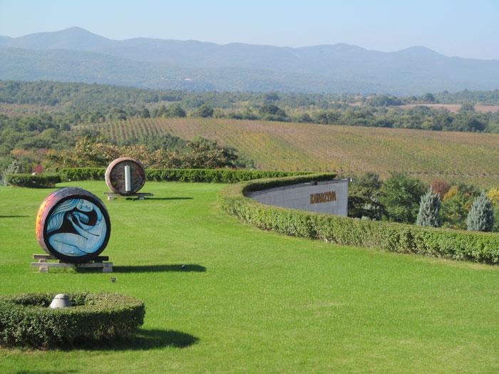 vineyards-katarzyna