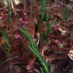 Drankjes en vermout op de Culiperslunch