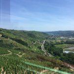 Wijn en kaas uit Condrieu: een perfecte combinatie