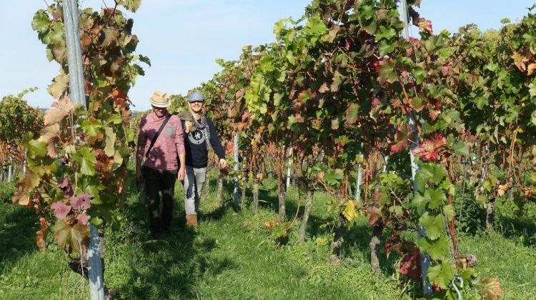 Crowdfunding voor wandelgids langs Nederlandse wijngaarden