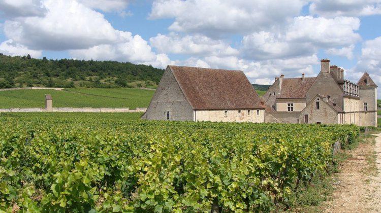 Nederlandse scriptie over rol cisterciënzers in de Bourgondische wijnbouw