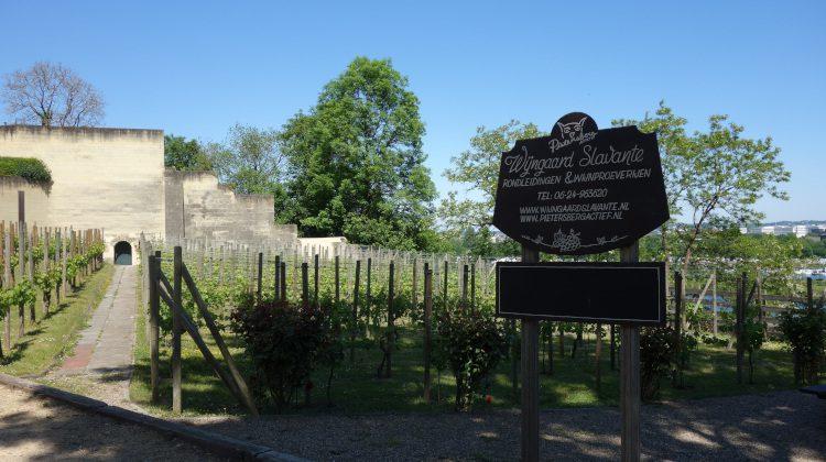 Wandeling langs de oudste wijngaarden van Nederland