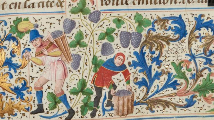Wijn tegen buikkrampen – remedies van 500 jaar geleden